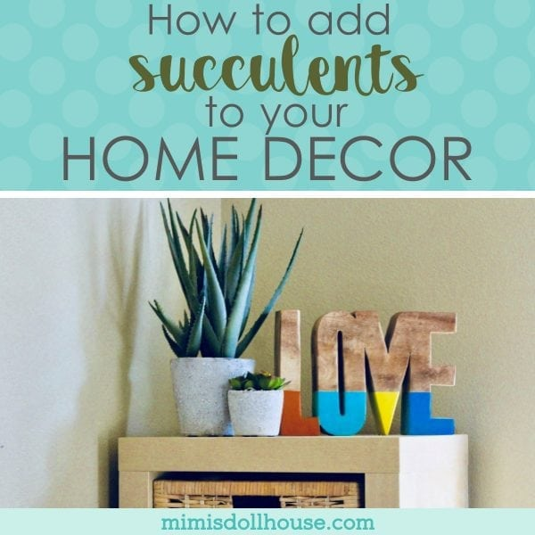 Decorating with Succulents: Add a little Green to your Home ...