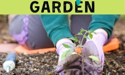 Five Steps To Create Your Easy Garden